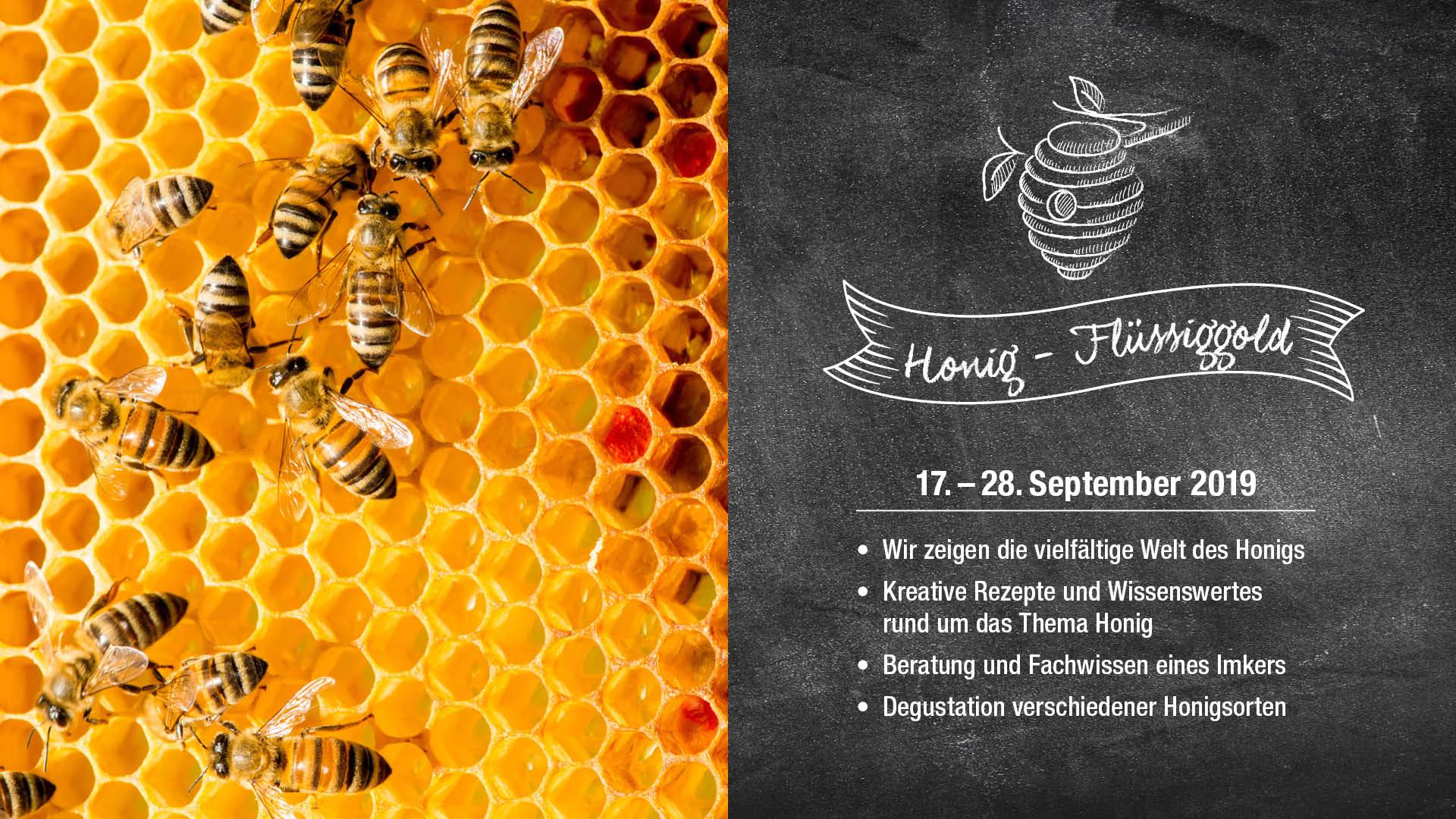 Alles rund um den Honig!